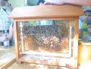 Dzień pszczół - 08.08.2015_4
