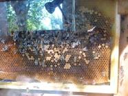 Dzień pszczół - 08.08.2015_5