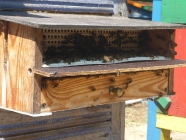 Dzień pszczół - 08.08.2015